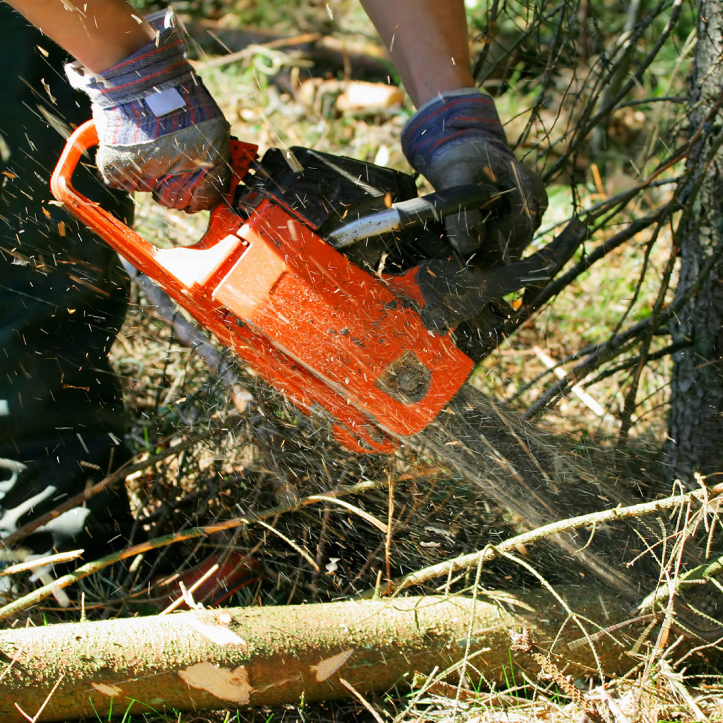Keep your trees neat and trim with regular pruning