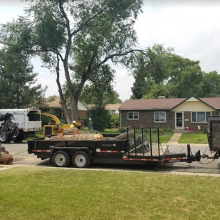tree trimming services centennial co, tree trimming services englewood co