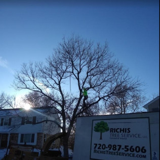 tree care services englewood co, tree care services centennial co