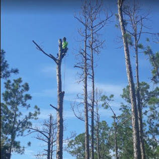 tree pruning englewood co, tree pruning centennial co